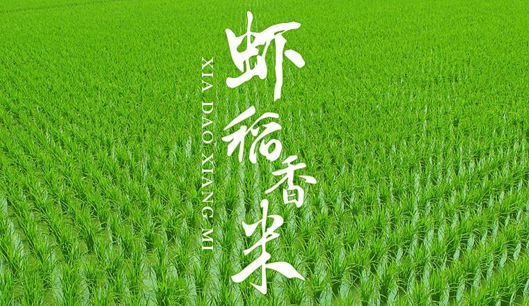 虾稻香米包装设计