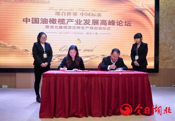 楚韵意品助力鑫榄源创建中国橄榄油强势品牌